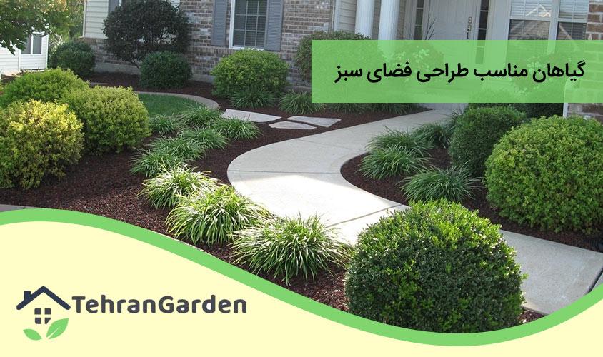 گیاهان فضای سبز